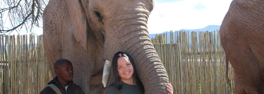 Meeting a 13 year old elephant at Buffelsdrift Game Lodge in South Africa in 2015