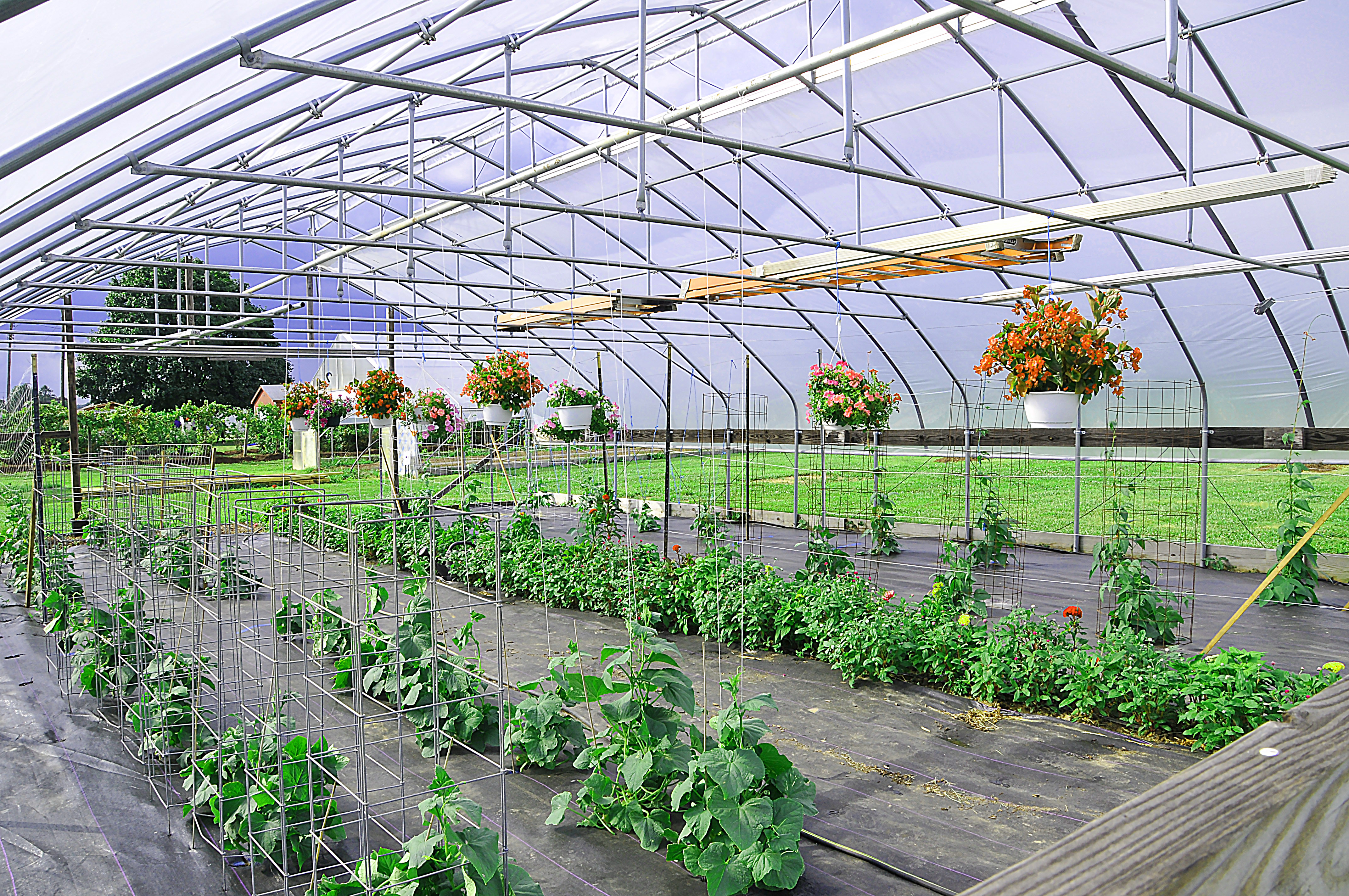 High Tunnel crops at DSU's Outreach and Research Center.