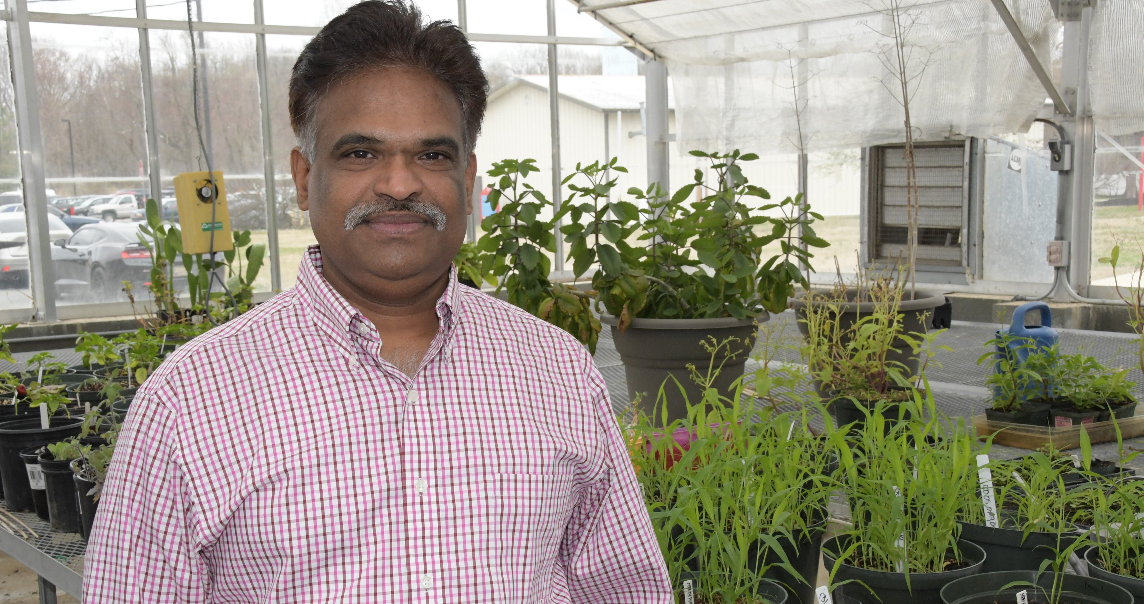 Dr. Sathya Elavarthi, associate professor of applied agriculture science, is spearheading the University's newest investigatory pursuit -- hemp cultivation research